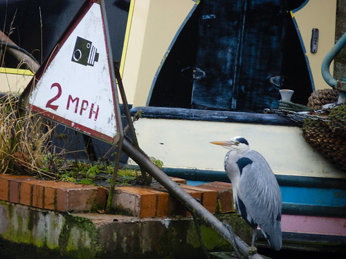 A heron observes the speed limit