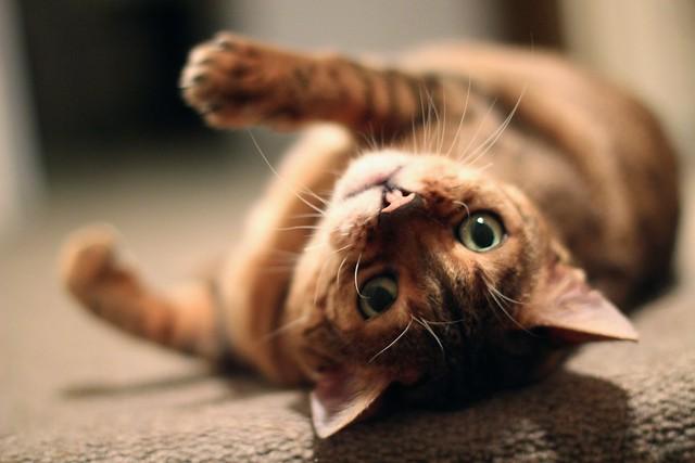 Rani-cat