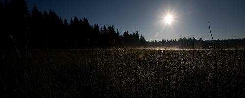 panorama misty fog sunrise switzerland twilight swiss pano foggy pines jura etangdelagruère