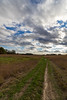 Path to the Sun & Clouds by Daniel-Godin