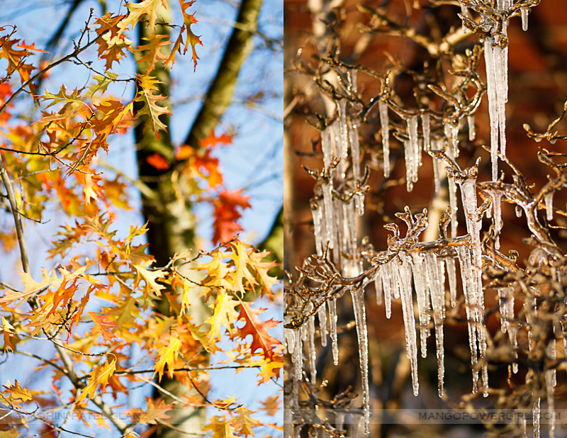 fall leaves & icicles