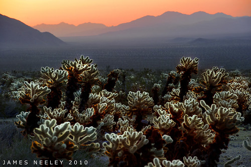 Cholla Morning