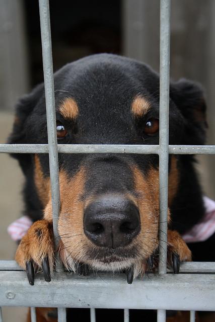 Dog Shelter Homes Launceston