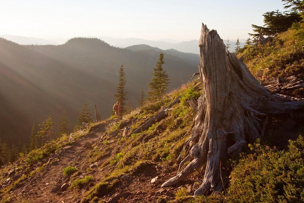 Noble stump