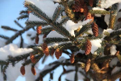 Хуснуллин: около 300 деревьев высадят впарке «Зарядье» в столицеРФ осенью