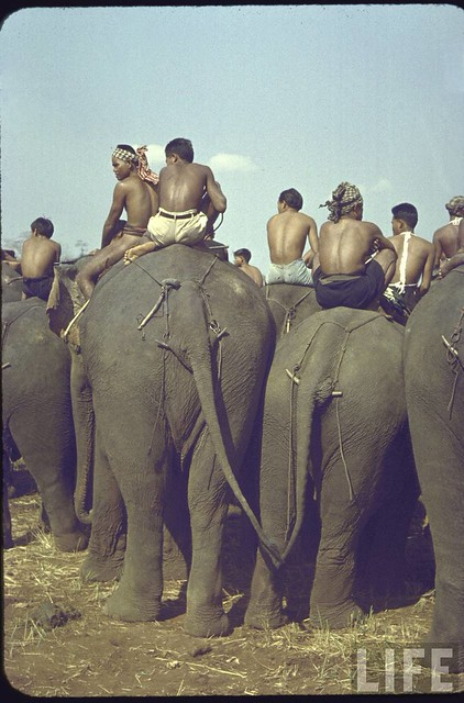 Mountain tribesmen at elephant racetrack during New Year's celebration.