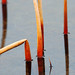 Abstract Reeds