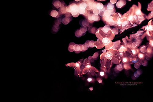 8.365 - Cherry Blossom Night