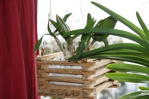 orchideen im h ngetopf seite 2 orchideenforum. Black Bedroom Furniture Sets. Home Design Ideas