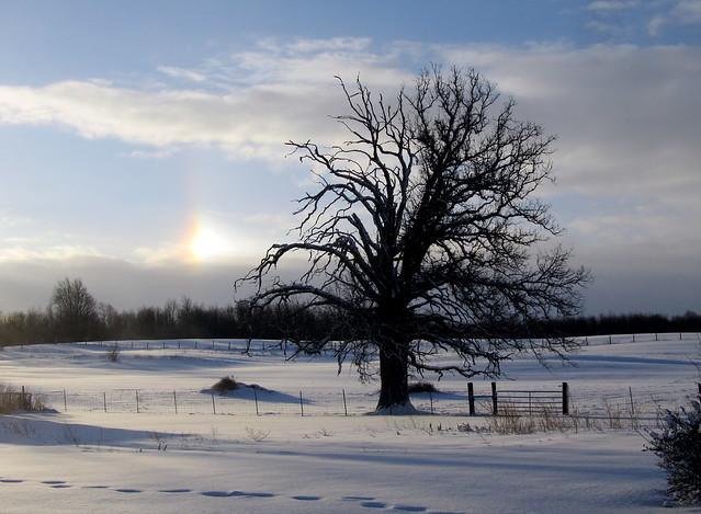 Winter tree from Flickr via Wylio