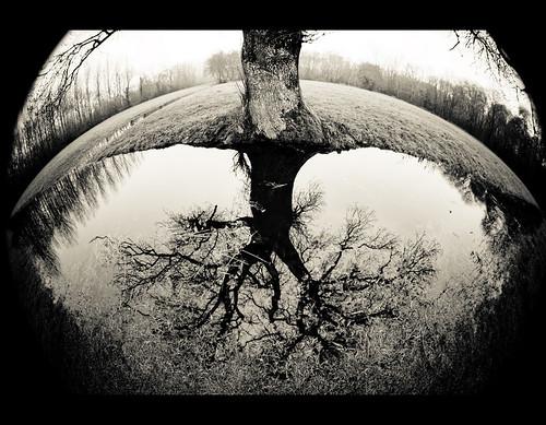 racines....