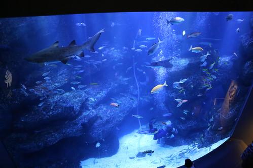 sumida_aquarium9
