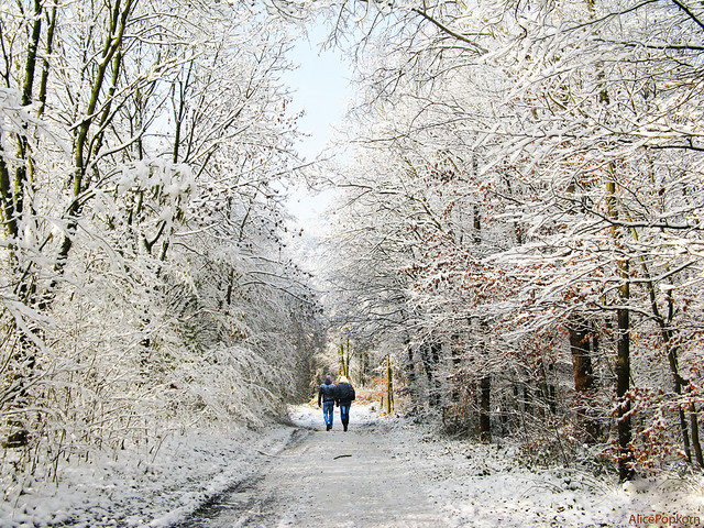 winter walk from Flickr via Wylio