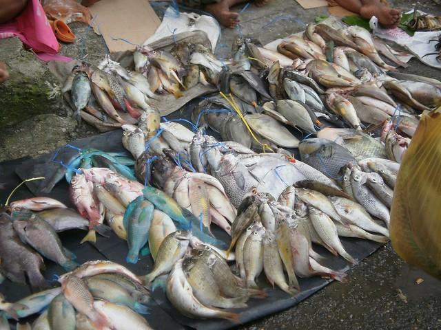 Bundles suva fish market flickr photo sharing for Fountainview fish market