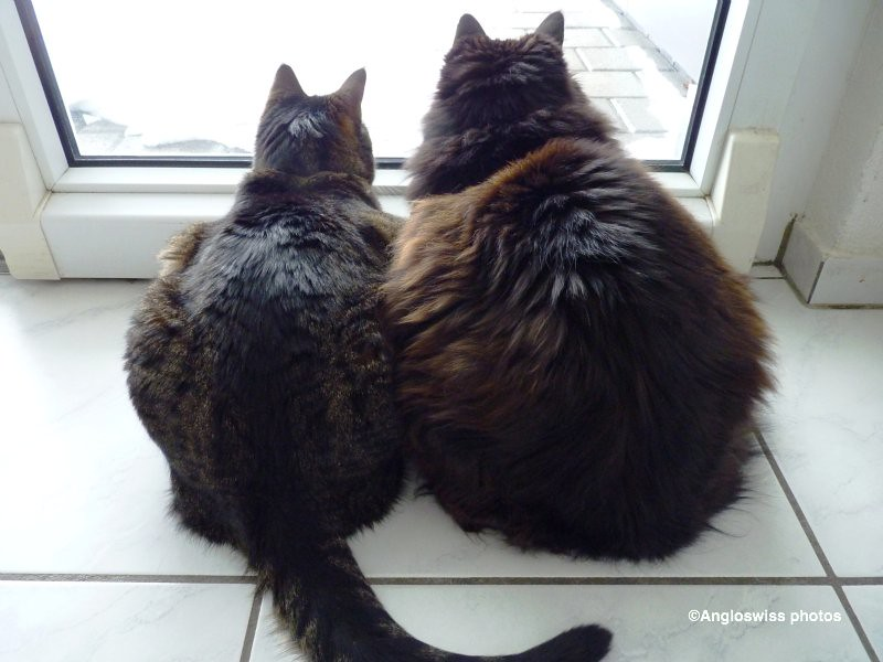Tabby and Nera snow watching