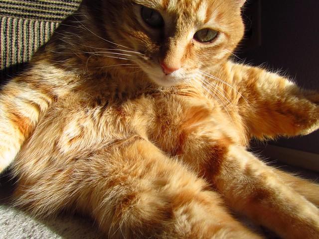 octopus cat flickr photo sharing