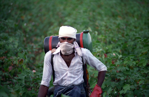 Farmer Spraying Cotton Field