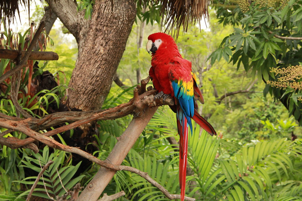 Tropical Rainforest Parrot | Jaime Olmo | Flickr