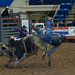 Salem Rodeo Bull Rider Gets Thrown