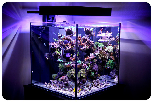 Stunning Cube Aquarium With Led Lighting Flickr Photo