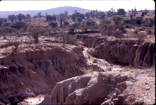 tanzania erosion baobab dryseason soilerosion gullies kondoa dodoma gullyerosion