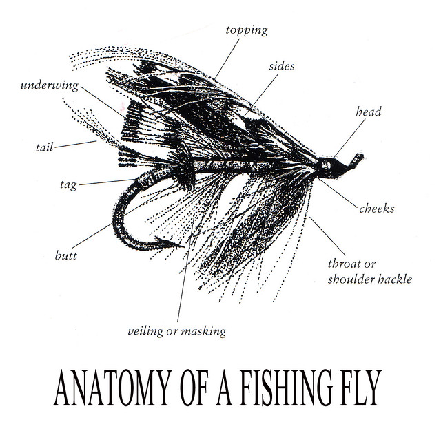 Anatomy of fly