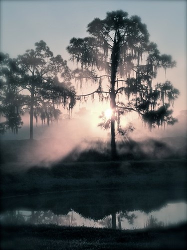 mist nature fog sunrise florida pines centralflorida avonpark
