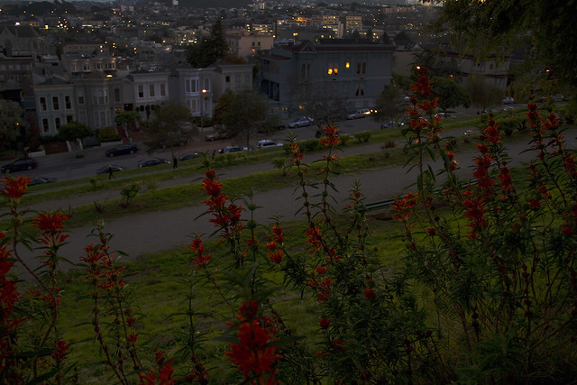 Alta Plaza, Pacific Heights.  San Francisco (2010)