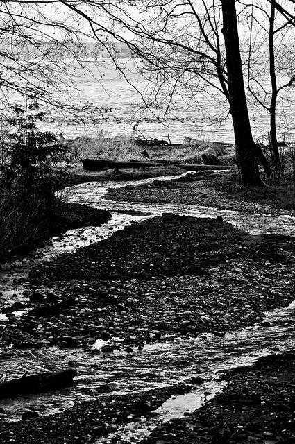 A river runs through Seahurst Park