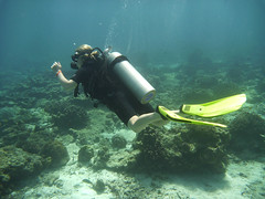 coral reef, underwater diving, sports, sea, recreation, outdoor recreation, scuba diving, water sport, underwater, reef,