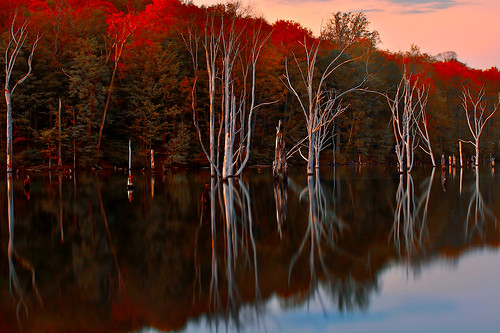 Firelight in the Dead Trees by SunnyDazzled