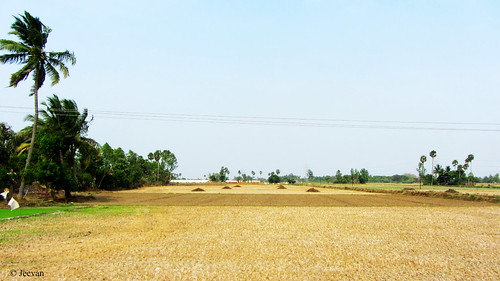 Harvested land