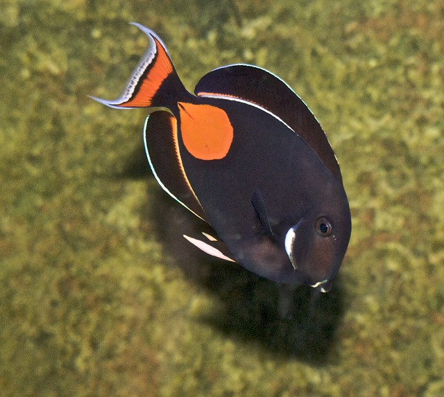 Header of Achilles Tang