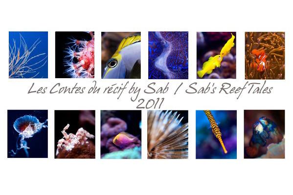 Le calendrier 2011 des contes du r cif est sorti forum for Vpc aquariophilie