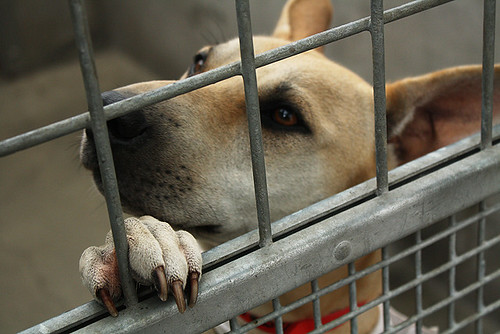 Dog in a Shelter