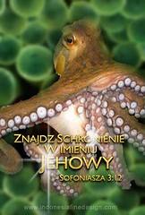animal(1.0), molluscs(1.0), octopus(1.0), organism(1.0), marine biology(1.0), marine invertebrates(1.0), fauna(1.0), wildlife(1.0),