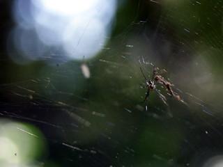 صورة Botanical Garden قرب بورتو أليغري. fauna spider botanicalgarden