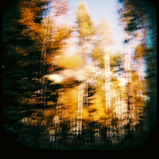 Arizona fall colors with the Diana+ medium format camera