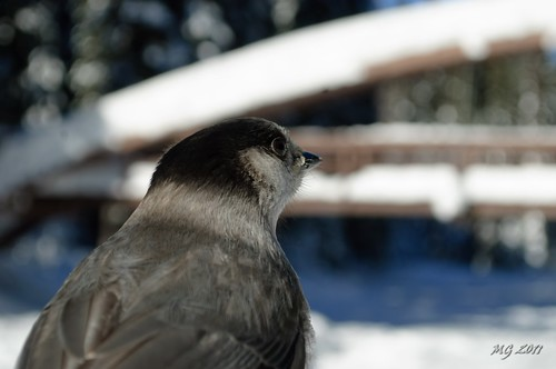 bridge snow canada cold bird nature frozen nikon walk freezing hike frigid manningpark