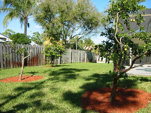 cincinnati landscaping