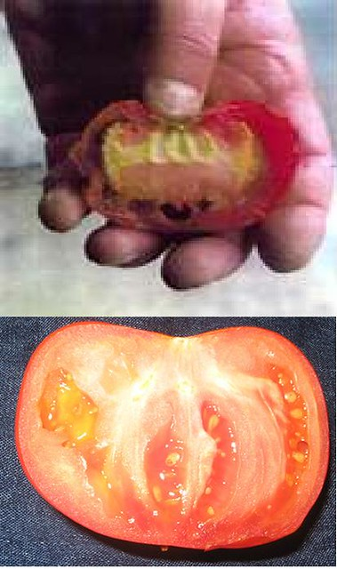 name of allah on two tomatoes