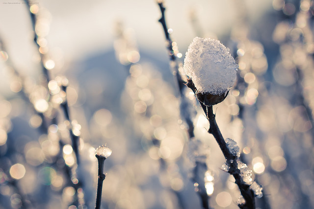 Fresh snow - Frosty mornings III