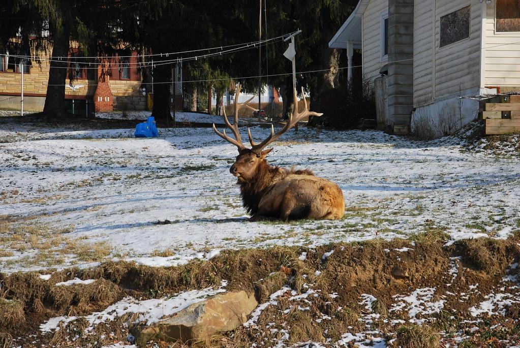 Big elk lick
