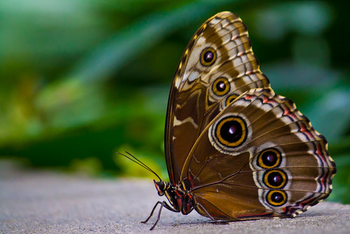 Tropical Butterfly House, Wildlife and Falconry Center
