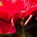 Il Natale a casa Gassamigli by seveDB