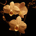 Orquideas. by gafasquemeestafas