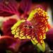 Hoja Bicolor. por Anayaphotography2.0