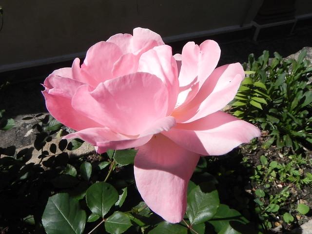 Uma Flor De Bom Dia: Tenha Um Bom Dia, Com Muitas Flores - Explore