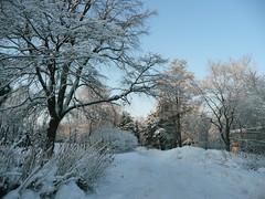 winter*11*зима