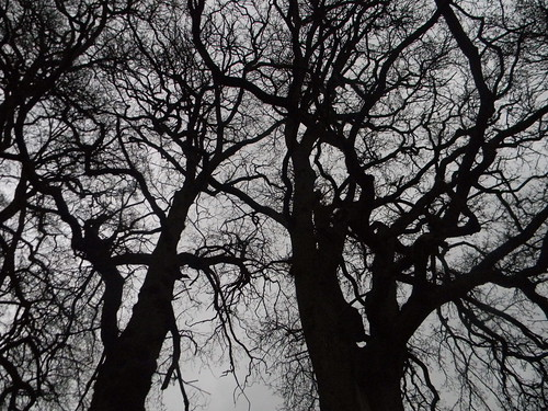 Trees in silhouette